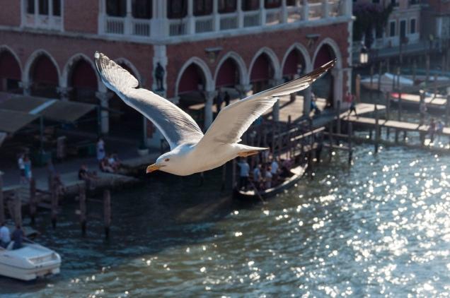 Venedig, 2017